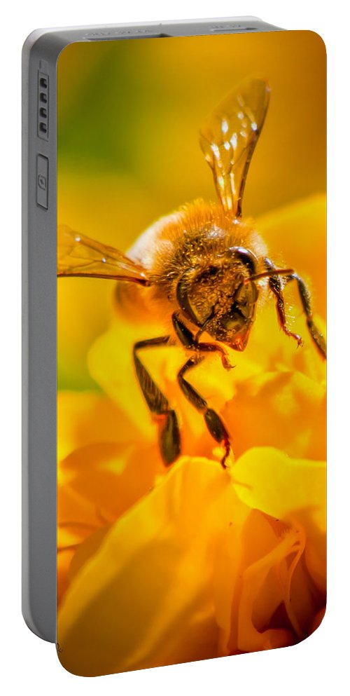 Bees Portable Battery Charger featuring the photograph The Bee Gets Its Pollen by Bob Orsillo