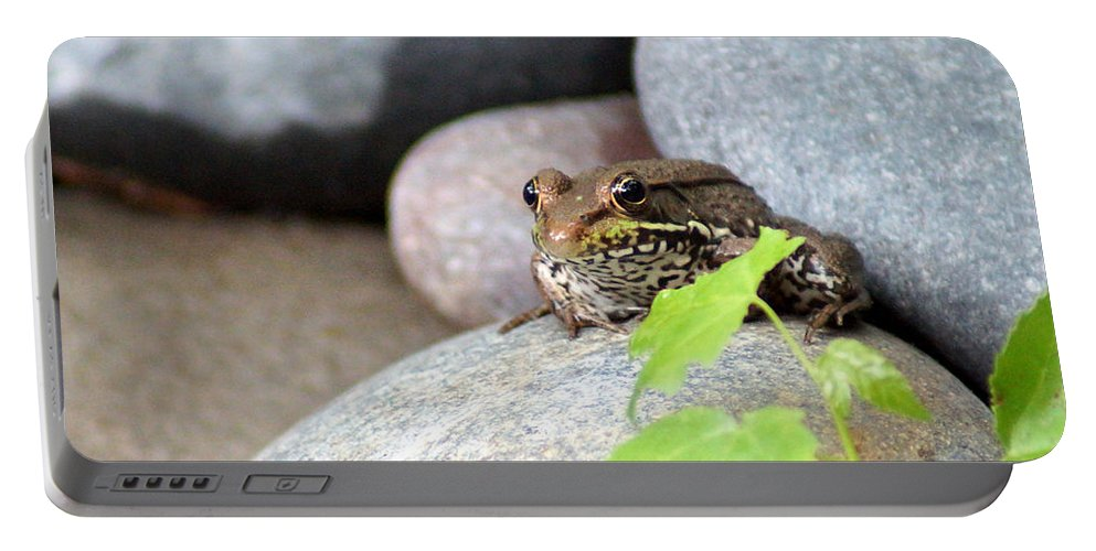 The Bronze Frog Portable Battery Charger featuring the photograph The Bronze Frog by Kim Pate