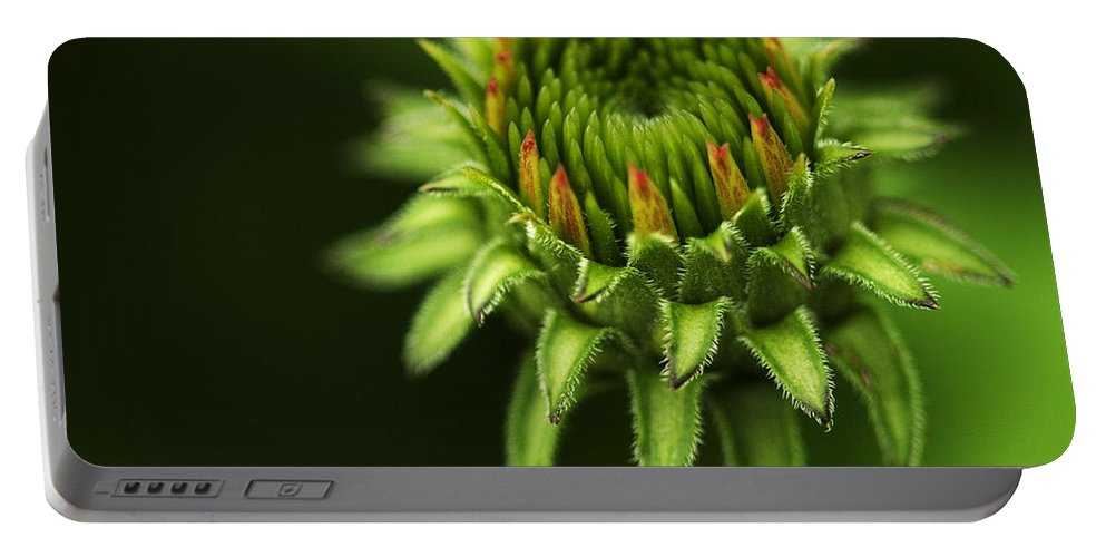 Echinacea Portable Battery Charger featuring the photograph The Bud Is Prettier Than The Bloom by Kathy Clark