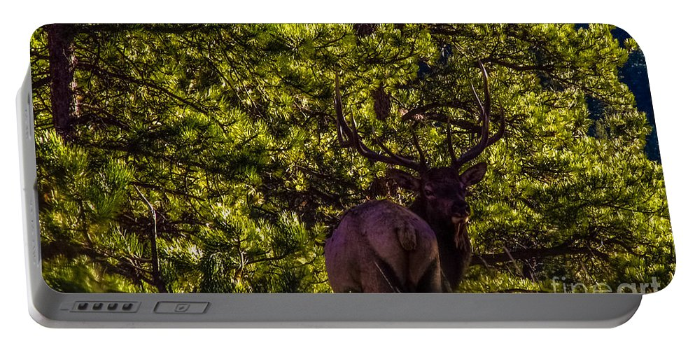 Wilderness Portable Battery Charger featuring the photograph The Bull Elk by Jesse Post