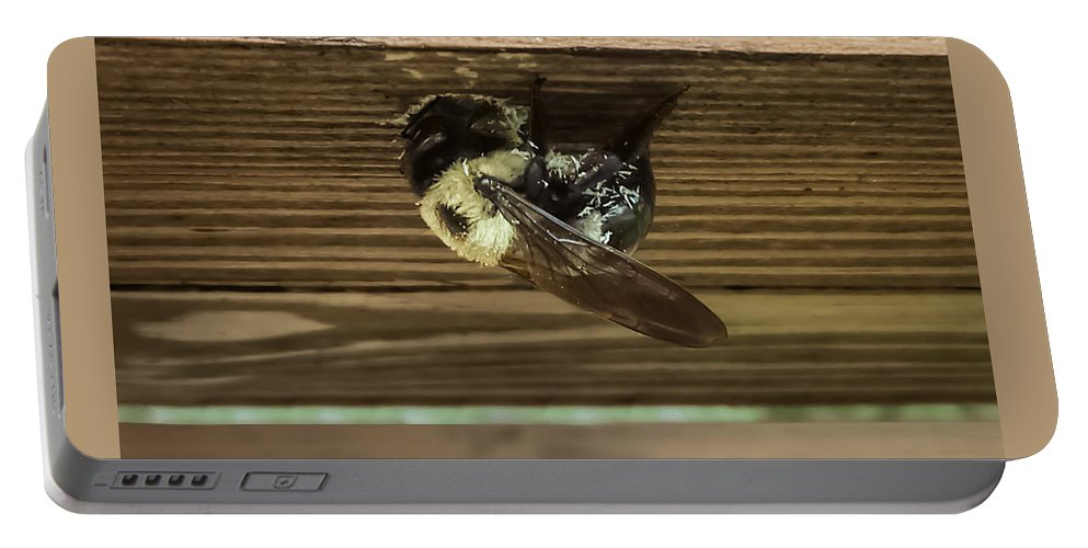 Carpenter Bee Portable Battery Charger featuring the photograph The Carpenter by Charlie Cliques