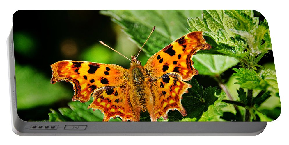 Polygonia C-album Portable Battery Charger featuring the photograph The Comma -- Polygonia C-album by Susie Peek