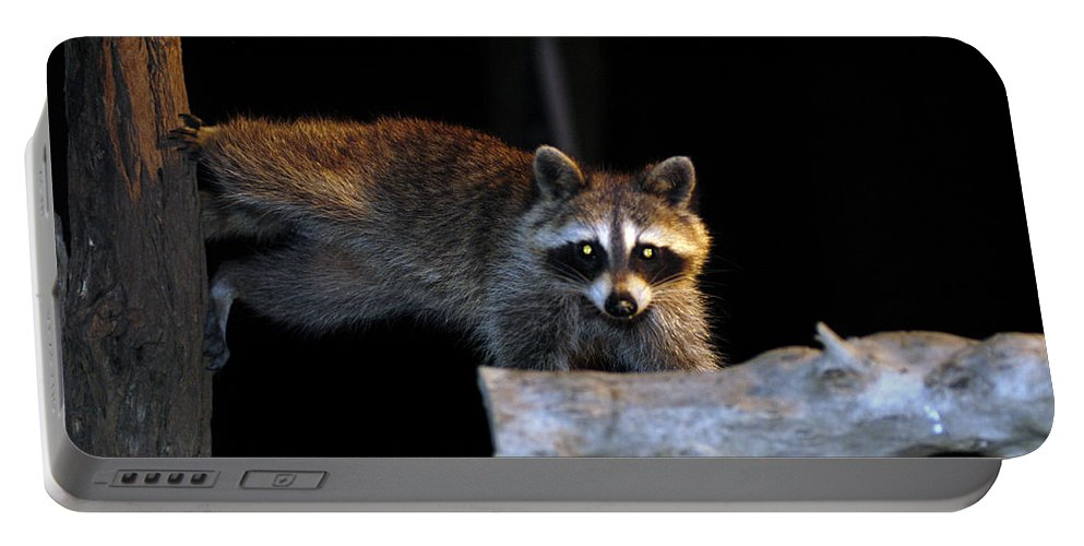 Raccoon Portable Battery Charger featuring the photograph The Cornbread Bandit Homestretch by Randall Branham