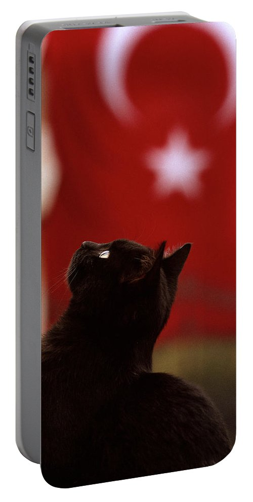 Cat Portable Battery Charger featuring the photograph The Curious Cat by Shaun Higson