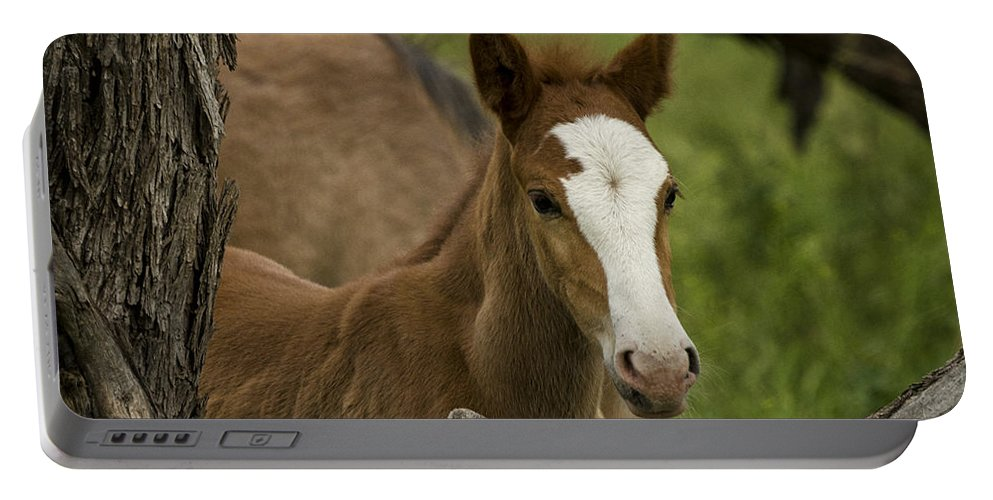 Wild Horses Portable Battery Charger featuring the photograph The Curious Colt by Saija Lehtonen