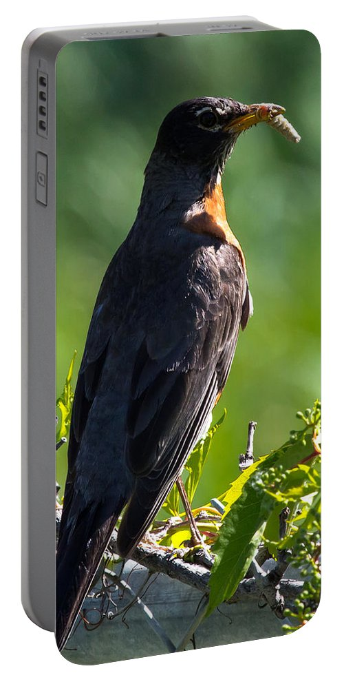 Robin Portable Battery Charger featuring the photograph The Early Bird by John Daly