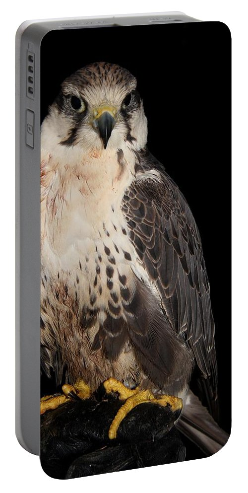 Animal Portable Battery Charger featuring the photograph The Falcon by Davandra Cribbie