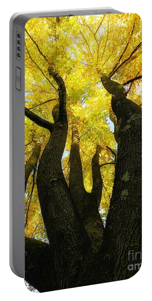 Tree Portable Battery Charger featuring the photograph The Family Tree by Sharon Woerner