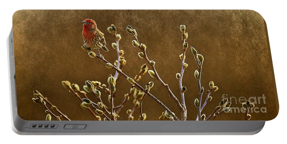 Adult Male House Finch Portable Battery Charger featuring the photograph The First Days Of Spring by Elizabeth Winter