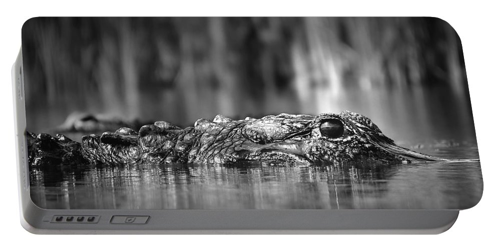 Alligator Portable Battery Charger featuring the photograph The Gator by Mark Andrew Thomas