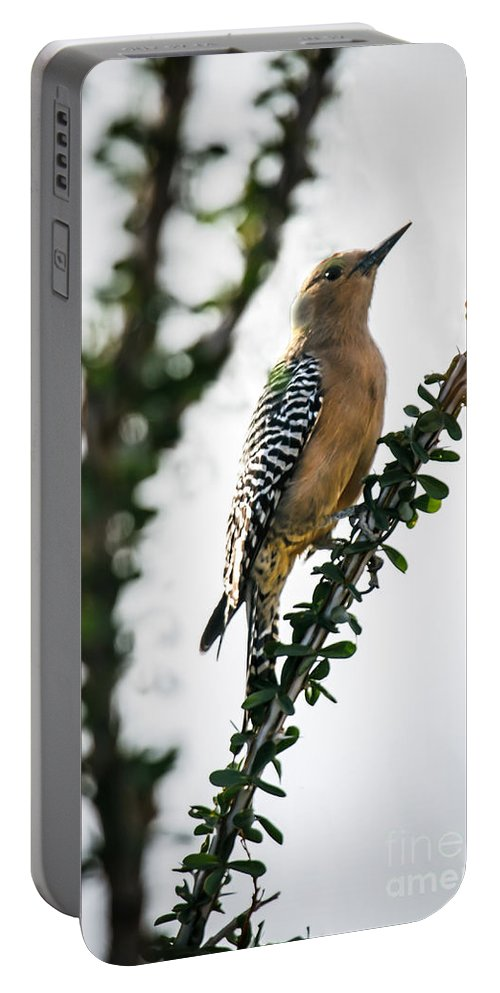 Bird Portable Battery Charger featuring the photograph The Gila Woodpecker by Robert Bales