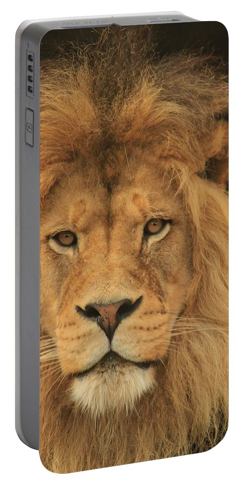 Lion Portable Battery Charger featuring the photograph The Glory Of A King by Laddie Halupa