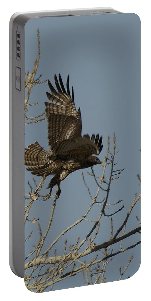 Redtail Hawk Portable Battery Charger featuring the photograph The Hawk by Ernie Echols