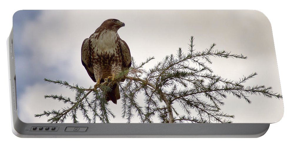 Bird Portable Battery Charger featuring the photograph The Hawk by Peggy Hughes