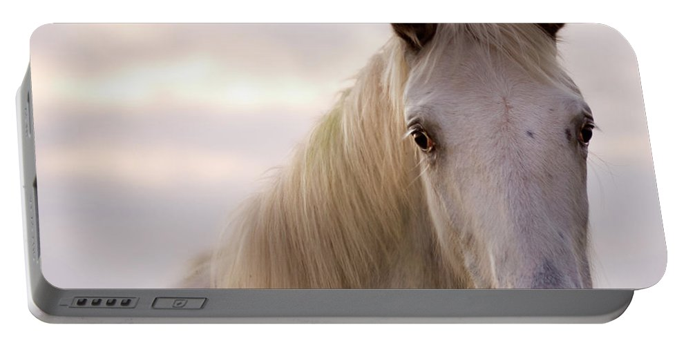 Horse Portable Battery Charger featuring the photograph The Horse In The Setting Sun by Angel Ciesniarska