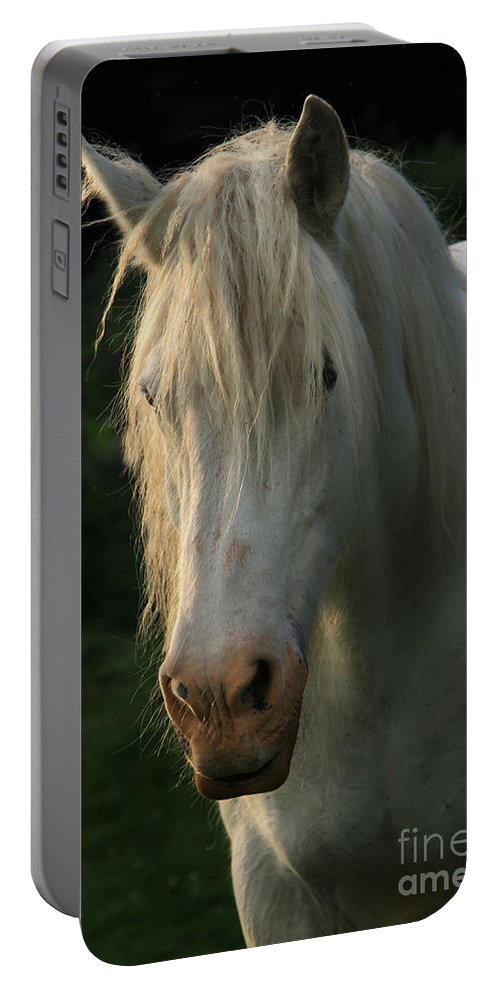 Unicorn Portable Battery Charger featuring the photograph The Light In The Mane by Angel Ciesniarska