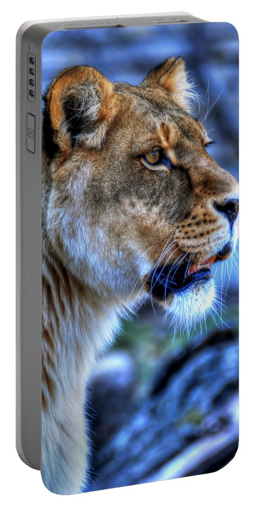 Lion Portable Battery Charger featuring the photograph The Lioness Alert by Michael Frank Jr