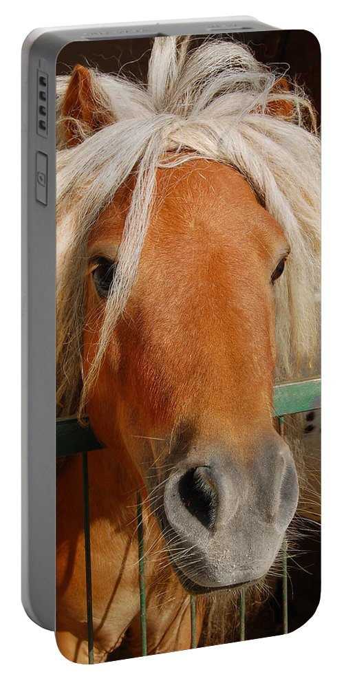 Pony Portable Battery Charger featuring the photograph The Little Pony by Gina Dsgn