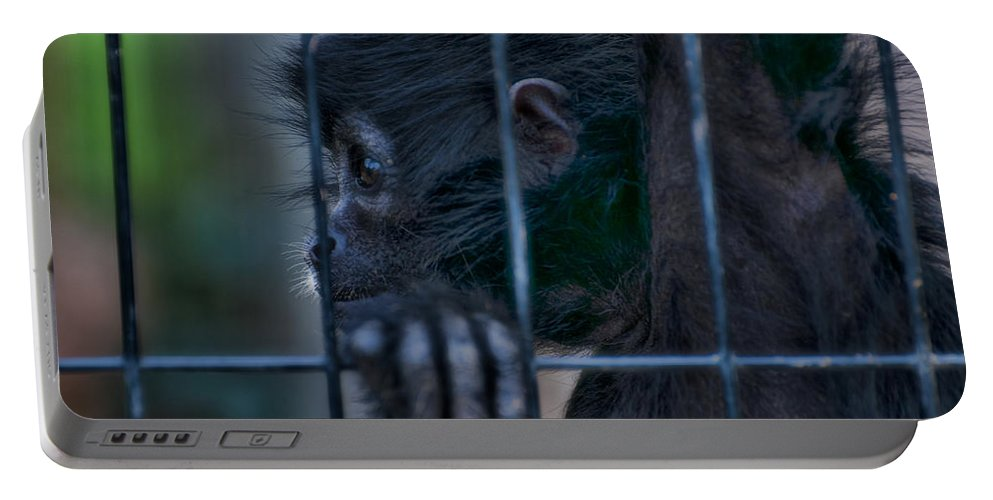 Spider Portable Battery Charger featuring the photograph The Look Of Captivity by Photos By Cassandra