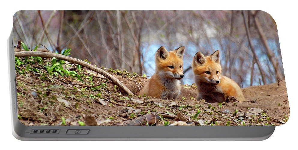 Red Foxes Portable Battery Charger featuring the photograph The Look by Thomas Young