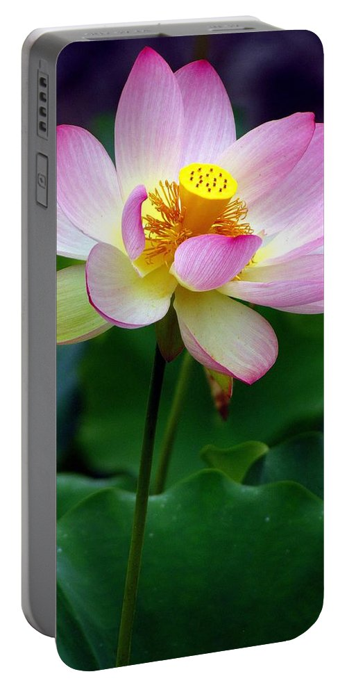 Carol R Montoya Portable Battery Charger featuring the photograph The Lotus by Carol Montoya