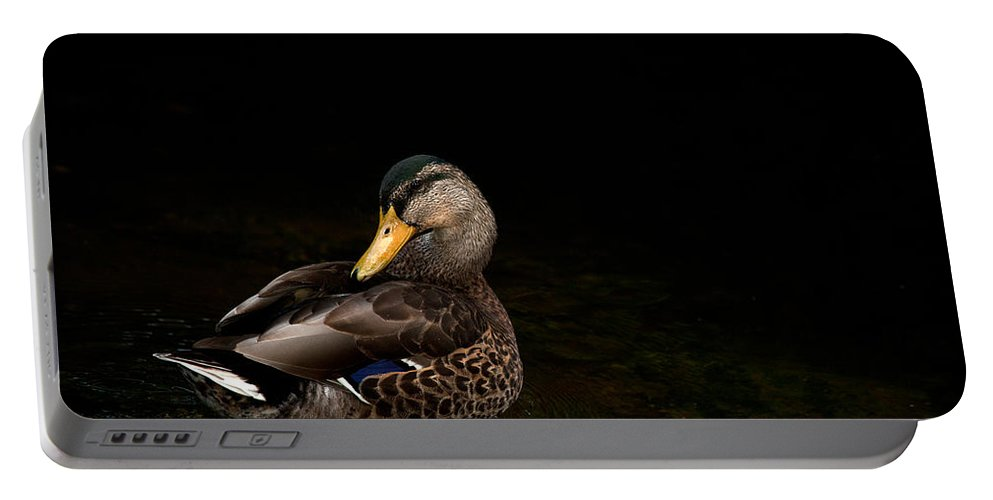 Mallard Portable Battery Charger featuring the photograph The Mallard by Karol Livote