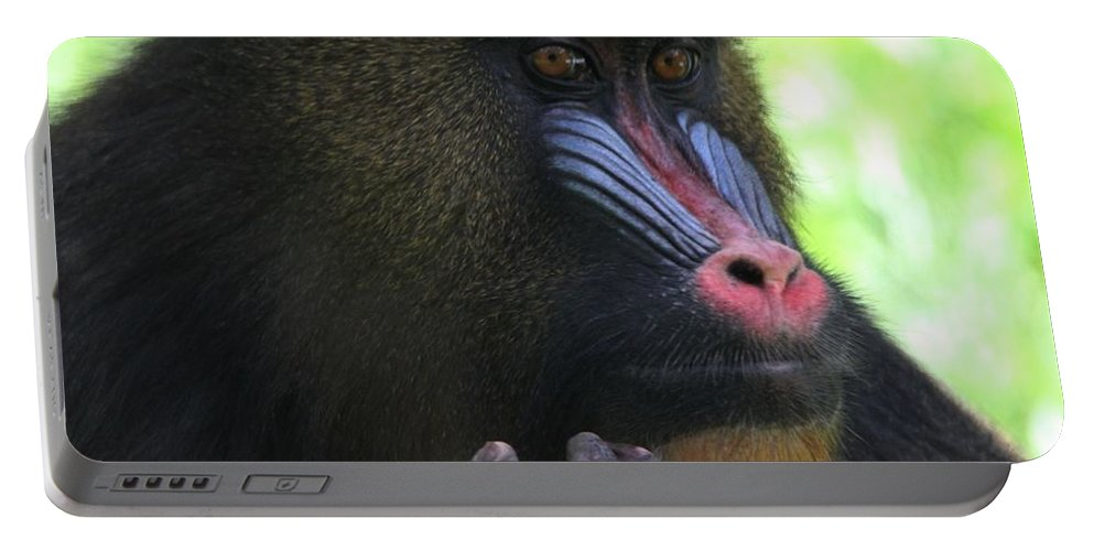 The Mandrill Portable Battery Charger featuring the photograph The Mandrill by Dan Sproul