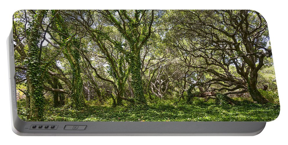 Los Osos Oak State Natural Reserve Portable Battery Charger featuring the photograph The Mysterious Forest - The Magical Trees Of The Los Osos Oak Reserve. by Jamie Pham