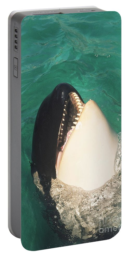 Original Portable Battery Charger featuring the photograph The Original Shamu Orca Whale At Sea World San Diego California 1967 by California Views Archives Mr Pat Hathaway Archives