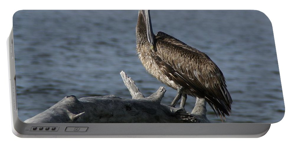 Brown Pelican Portable Battery Charger featuring the photograph The Pelican Pose by Patricia Twardzik