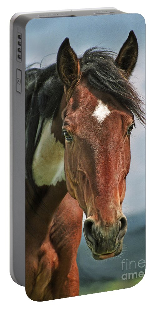 Hucul Portable Battery Charger featuring the photograph The Pinto Horse Portrait by Angel Ciesniarska