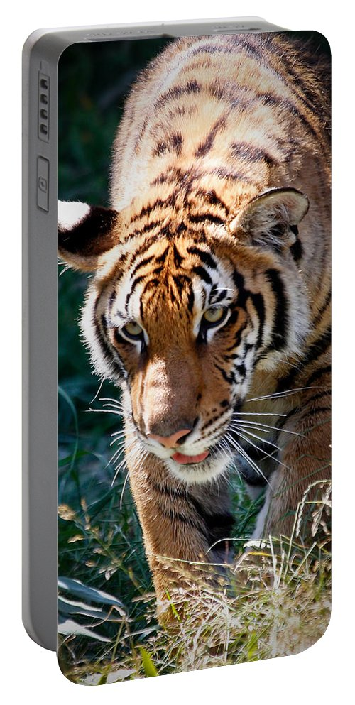 Tiger Portable Battery Charger featuring the photograph Prowling Tiger by Athena Mckinzie