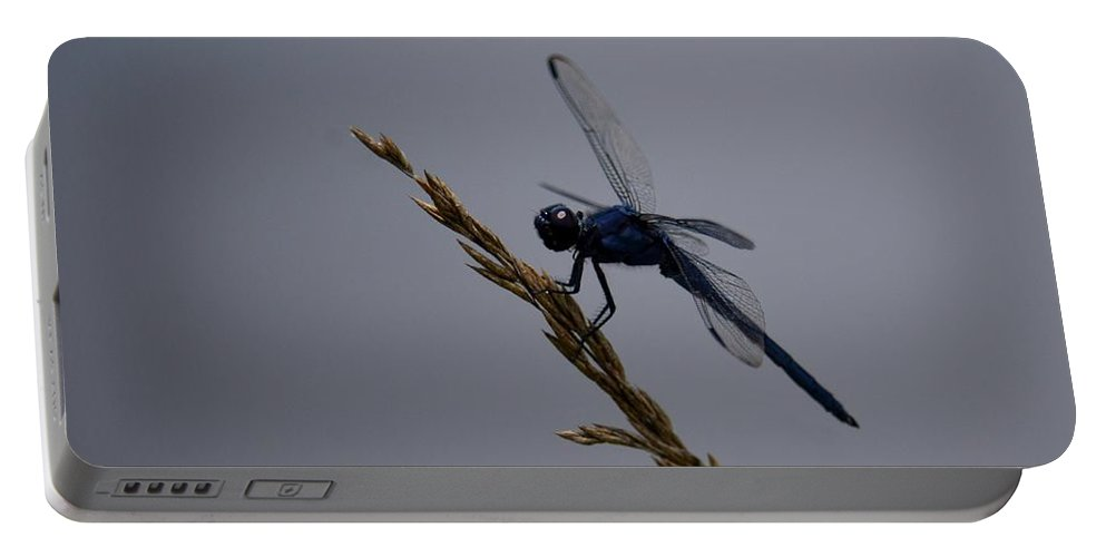 The Slaty Skimmer Portable Battery Charger featuring the photograph The Slaty Skimmer by Maria Urso