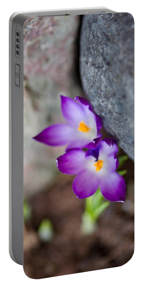 Spring Portable Battery Charger featuring the photograph The Softness Of Crocus - Flowers - Spring by Marie Jamieson