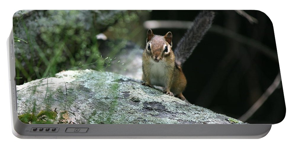 Chipmunk Portable Battery Charger featuring the photograph The Stand Off by Neal Eslinger