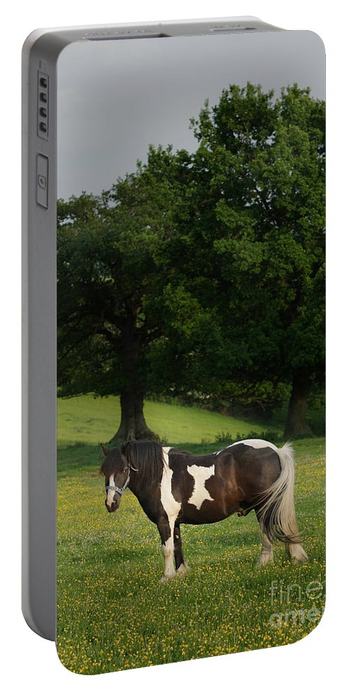 Horse Portable Battery Charger featuring the photograph The Sunny Meadow by Angel Ciesniarska