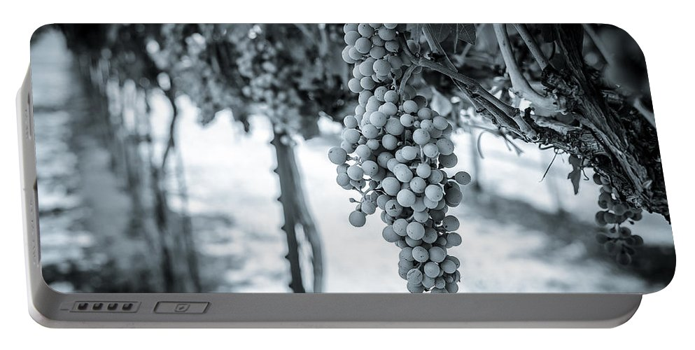 Wine Portable Battery Charger featuring the photograph The Vineyard  Bw by David Morefield