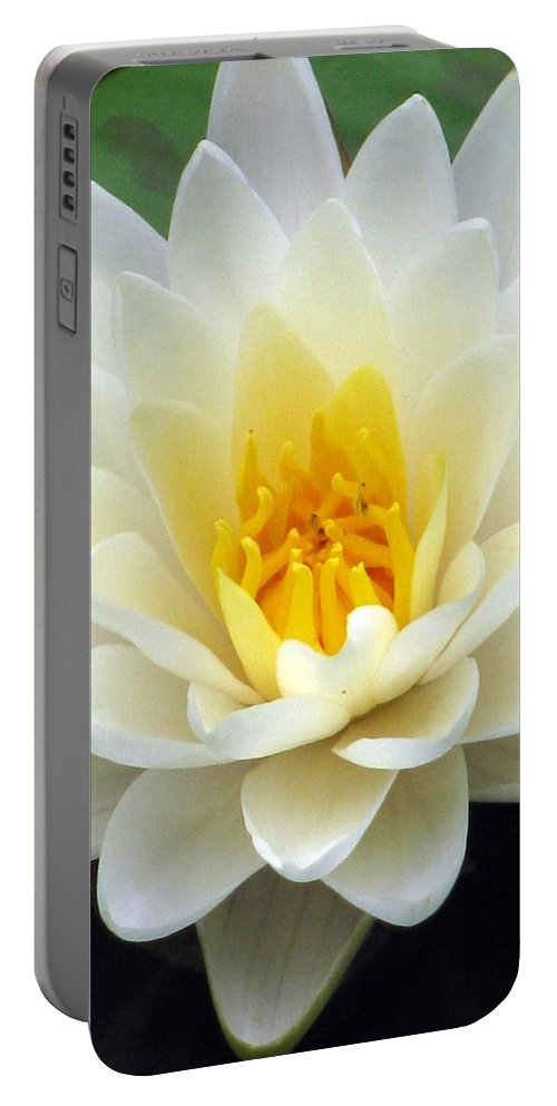 Water Lilies Portable Battery Charger featuring the photograph The Water Lilies Collection - 03 by Pamela Critchlow