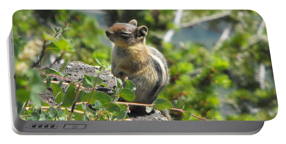 Animals Portable Battery Charger featuring the photograph This Is The Life by Brandi Maher