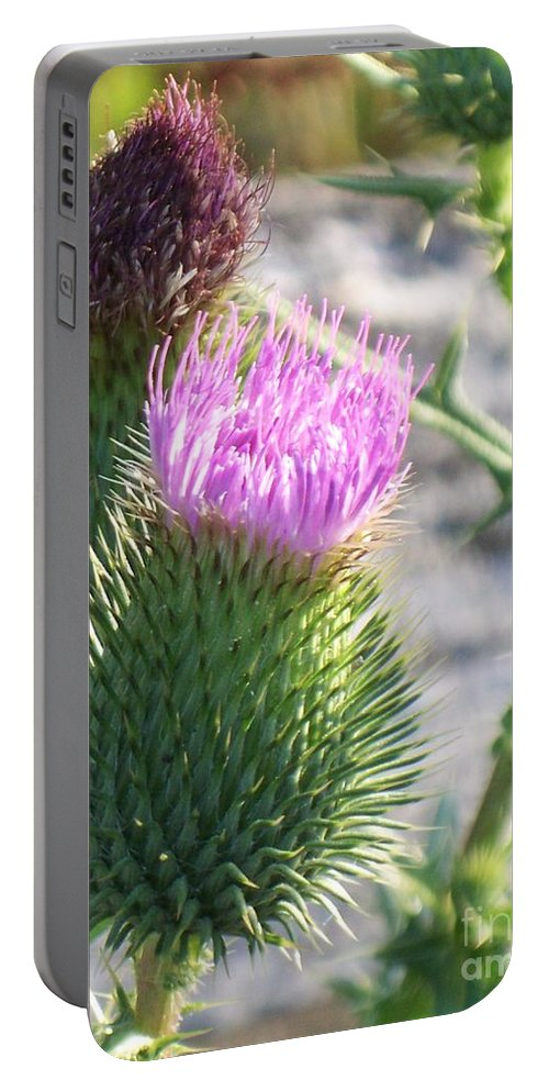 Thistle Portable Battery Charger featuring the painting Thistle Flower by Eric Schiabor