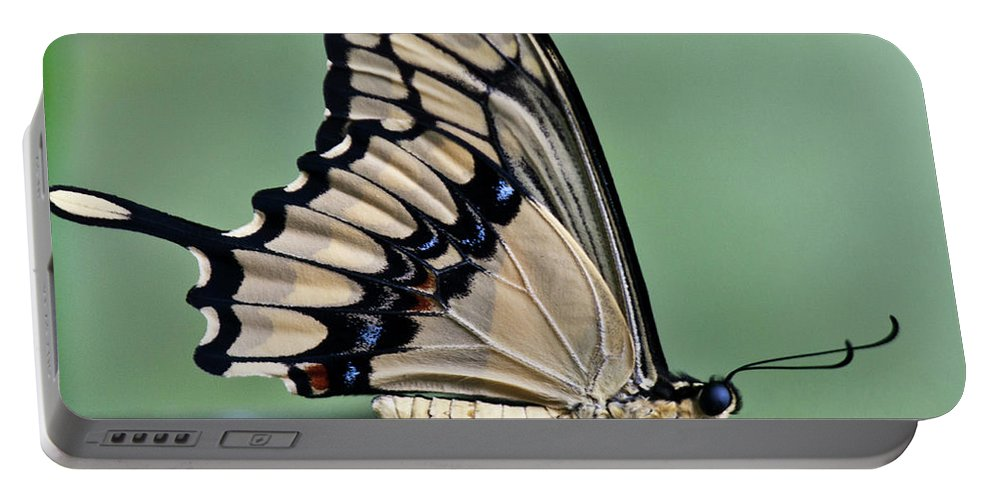 Heiko Portable Battery Charger featuring the photograph Thoas Swallowtail Butterfly by Heiko Koehrer-Wagner