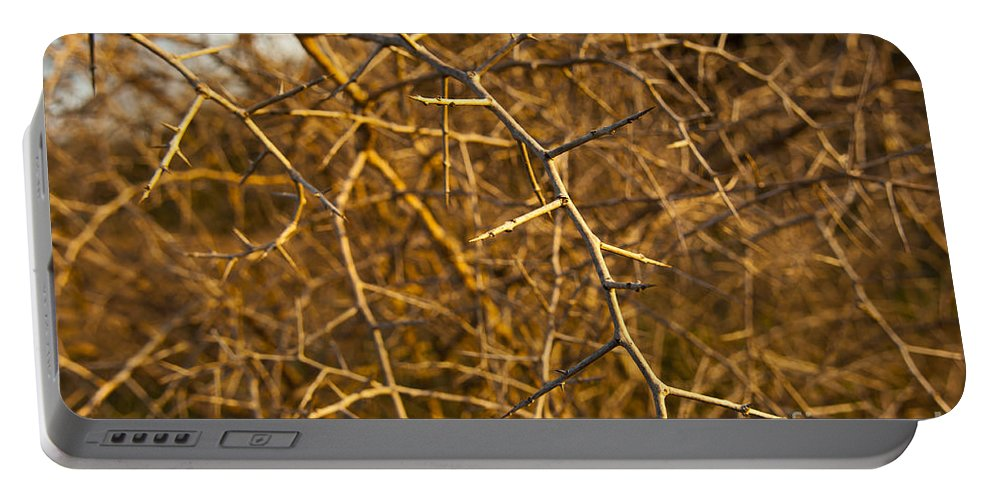 Macro Portable Battery Charger featuring the photograph Thorn Bush by Tim Hester