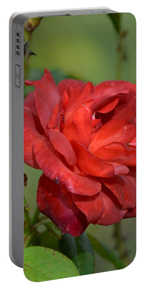 Thorny Red Rose Portable Battery Charger featuring the photograph Thorny Red Rose by Maria Urso