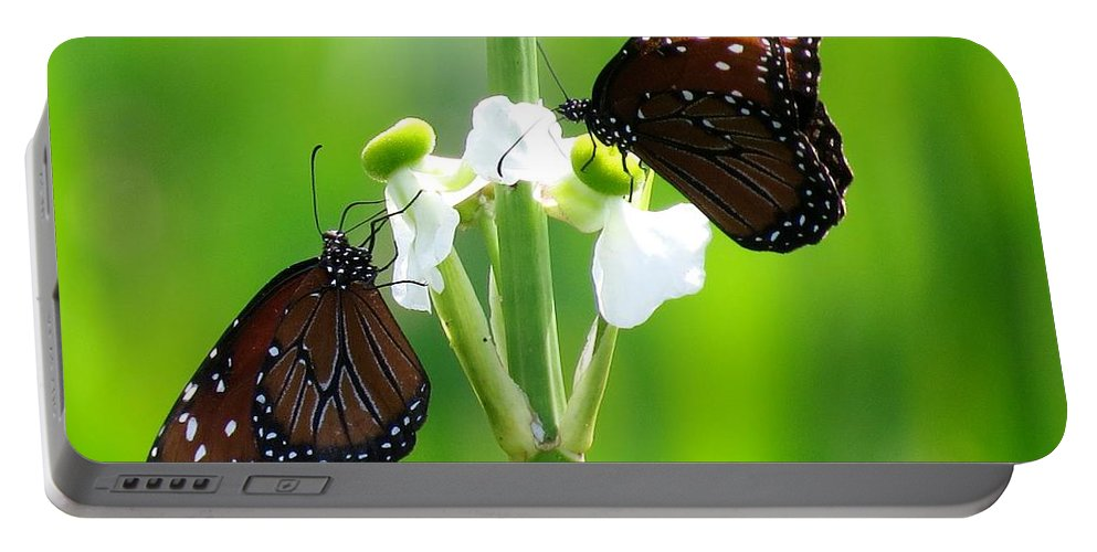 Insects Portable Battery Charger featuring the photograph Three Beauties by Zina Stromberg