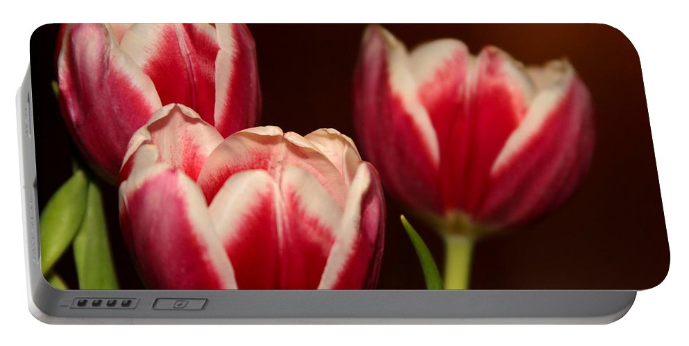 Amazing Portable Battery Charger featuring the photograph Three Red Tulips by Sabrina L Ryan