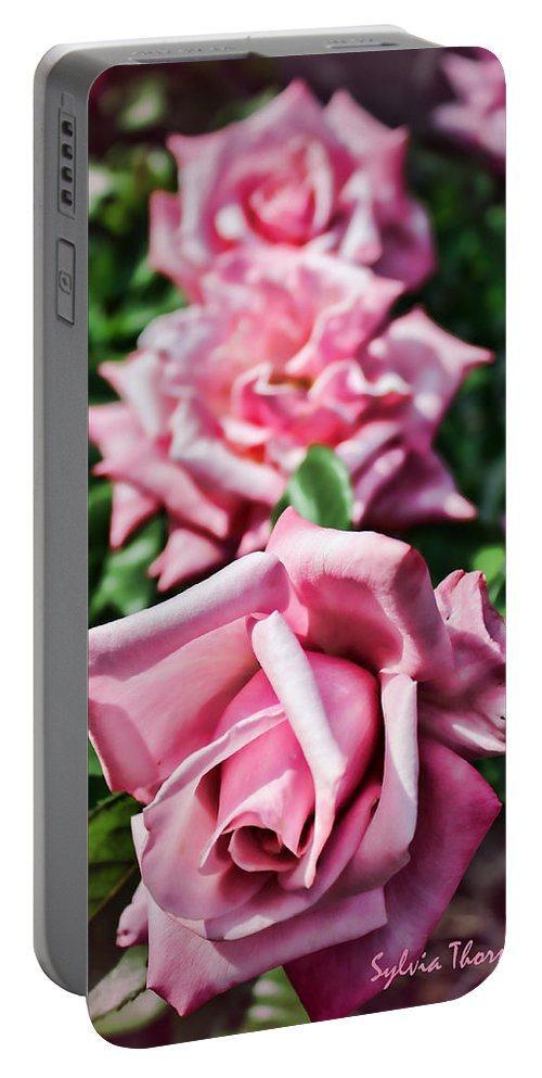 Roses Portable Battery Charger featuring the photograph Three Times A Lady by Sylvia Thornton