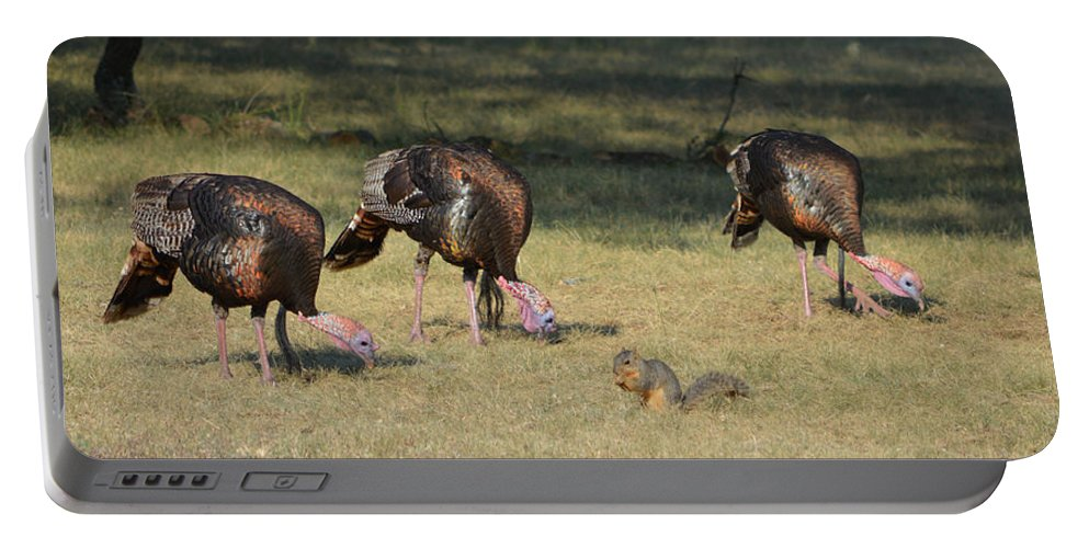Turkeys Portable Battery Charger featuring the photograph Three Toms And A Squirrel by Gale Cochran-Smith