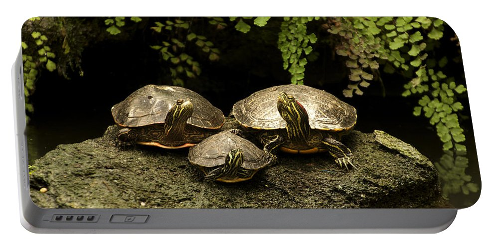 Turtle Portable Battery Charger featuring the photograph Three Turtles by Thomas Woolworth