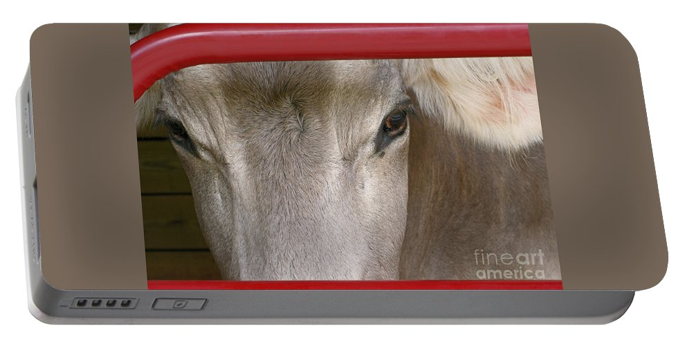 Cow Portable Battery Charger featuring the photograph Through The Gate by Ann Horn