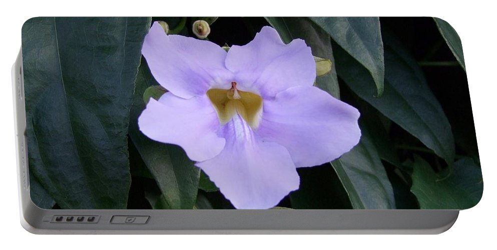 Purple Flowers Portable Battery Charger featuring the photograph Thunbergia by Mary Deal